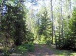 Полесский лес - причина приехать отдыхать в Калининград